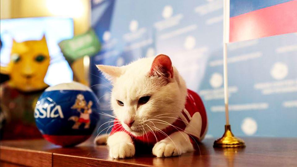 Este gato adivinha os resultad...