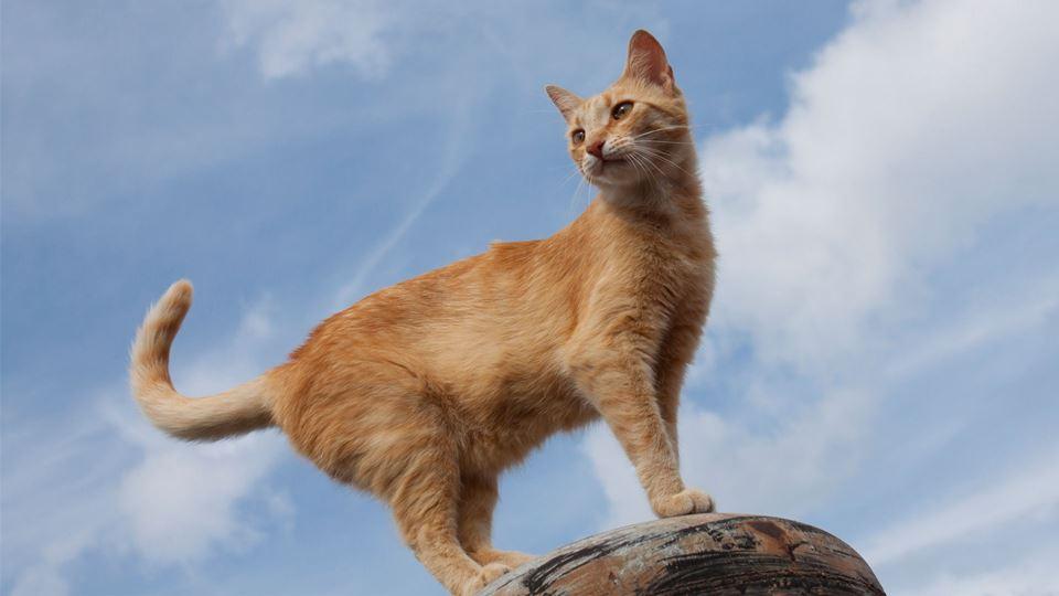 gatos-alturas