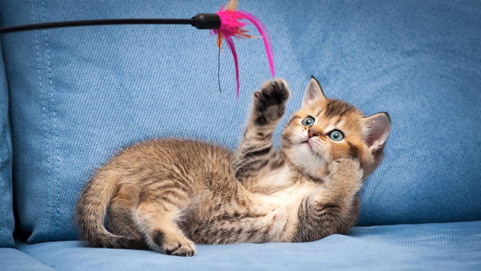 gatos-caçar