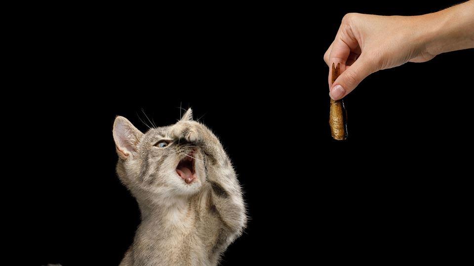 gatos cheiro