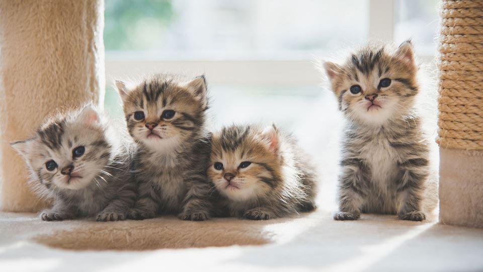 As 6 coisas que os gatos mais ...