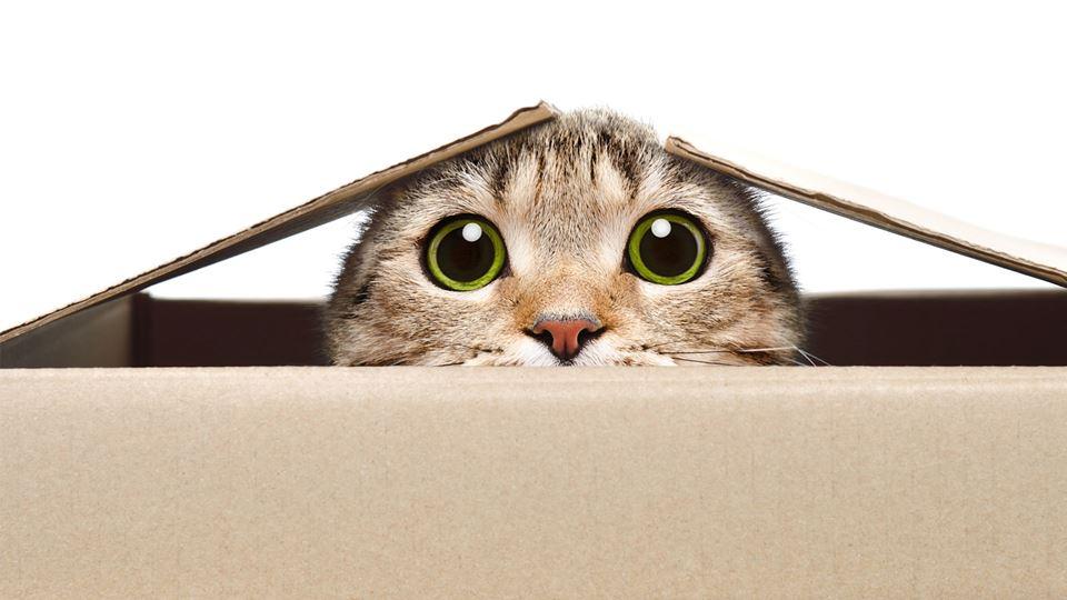 gatos_trocadeolhares