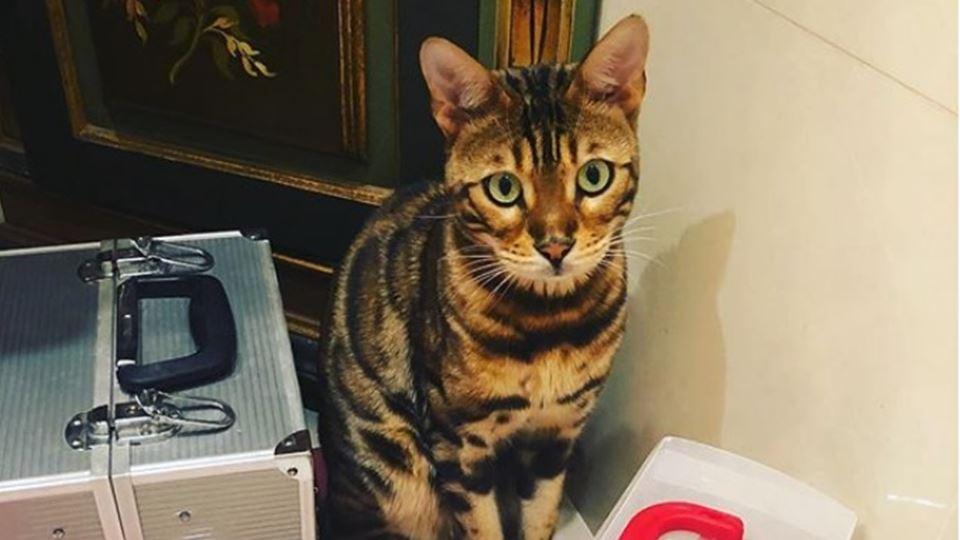 O gato da Sónia Tavares chama-...