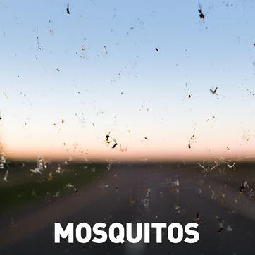 RFM - Nilton - mosquitos - 26-06-2017
