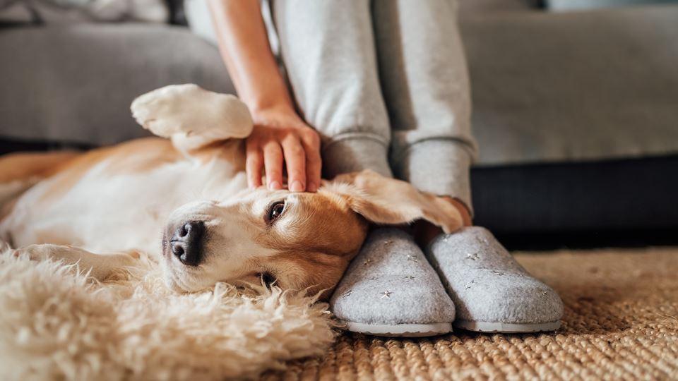 pantufas e cão