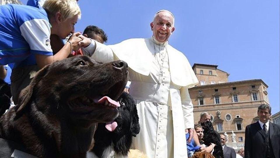 papa francisco e animais