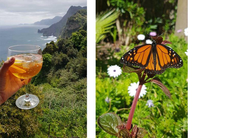 Um brinde  à Madeira com direito a borboleta