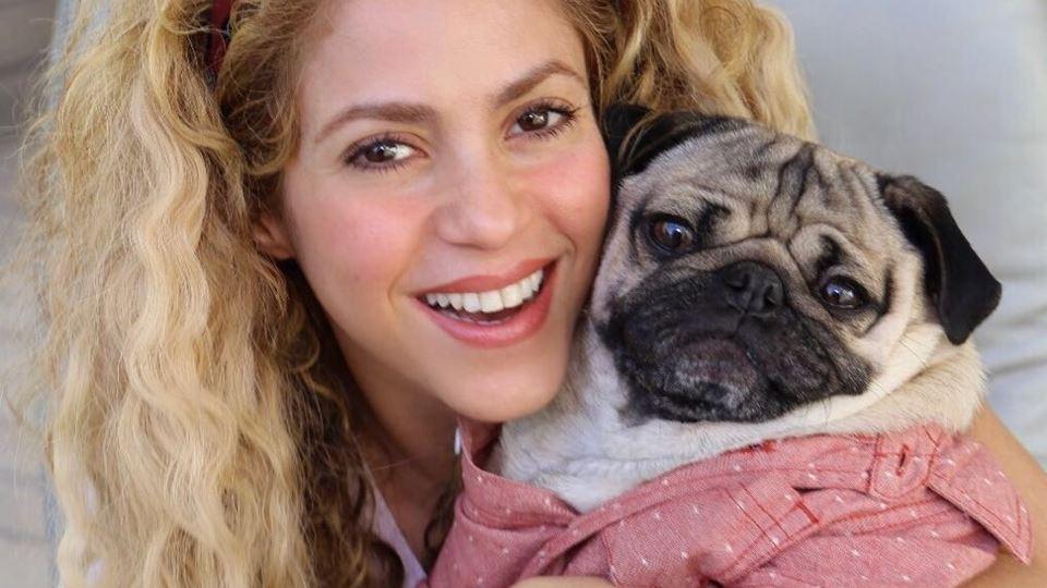 Shakira está encantada com Dou...