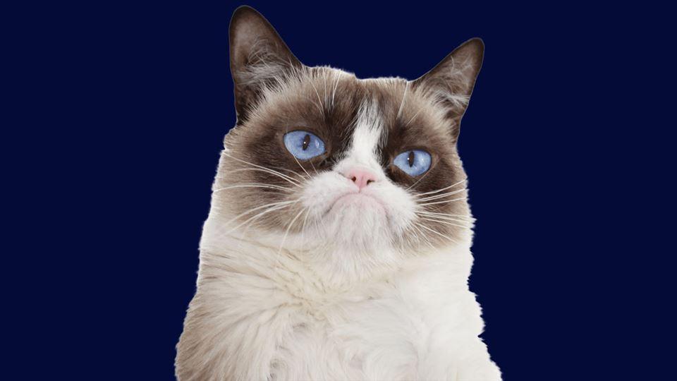 Morre Grampy Cat, o gato mais ...